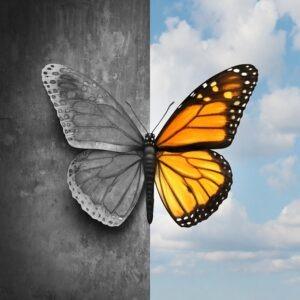psychoterapia a coaching, motyl, kolorowy motyl, szary motyl, przemiana, rozwój
