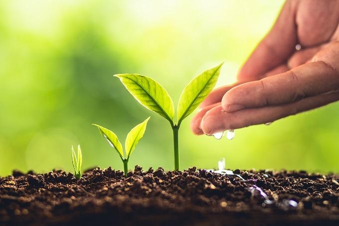 psychoterapia a coaching, rozwój, wzrost, rośliny, woda